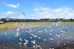 RSPB Hayle Estuary