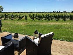 Tinwood Estate Vineyard