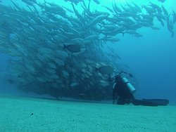 Cabo Diver