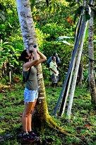 Deyanira birding