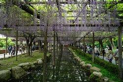 Tenno River Park