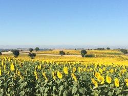 Trésor Languedoc Tours