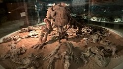 Museu de Paleontologia Irajá Damiani Pinto