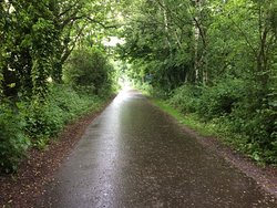 Goldenacre Path. Hard to believe your in the city. Beautiful woodlands.