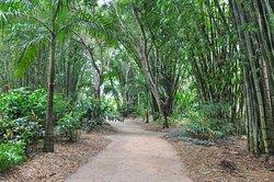 Bamboo Land Nursery & Parklands