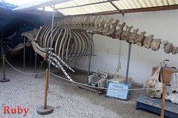 Museo de las Ballenas
