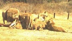 Krugersdorp Game Reserve