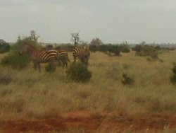 Gallo Safaris Kenya
