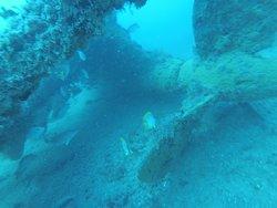 Sea Kat Divers
