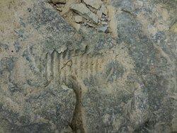 fossil near the Vinegar Mill