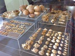 Thalassa Municipal Museum