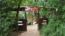 Bonobo Parc