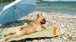 Spiaggia dei Cani