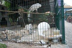 Park Rodnik Petting Zoo