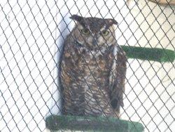 Suisun Wildlife Center