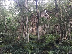 Hawaiian Hiking Company