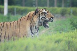 Qinhuangdao Wildlife Park