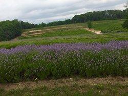 Green Bird Cellars & Organic Farms