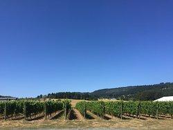 ArborBrook Vineyards