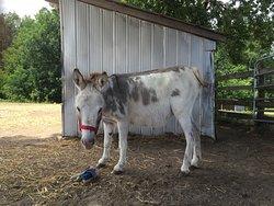 PrimRose Donkey Sanctuary