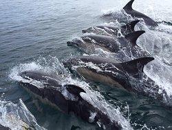 Blue Ocean Adventures - Ramsey Island Wildlife Boat Trips