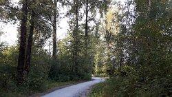 Surrey Bend Regional Park