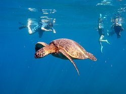 Kauai Sea Rider Snorkel & Whale Watching Tours