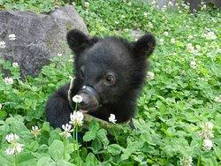 Okuhida Bear's Park