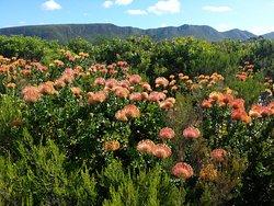 Van Stadens Wild Flower Reserve