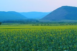 Hulun Buir Prairie