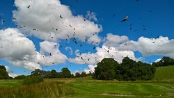 Red Kite Feeding Station & Rehabilitation Centre