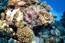 Shaab Abu Ramada/The Aquarium