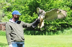 Muskoka Birds of Prey