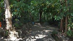 The Island Spice Grove