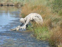 Réserve Naturelle Marais de Séné