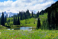 Tipsoo Lake Loop