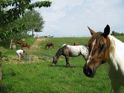 Ferme Equestre Le Cheval Blanc