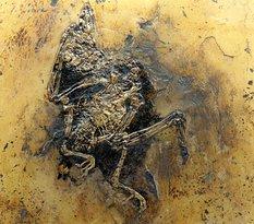 Fossilien und Heimatmuseum
