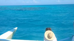 The best sailing and reef snorkeling ever