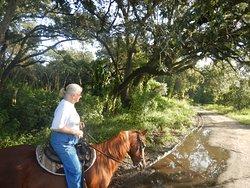 Horsespring Farm