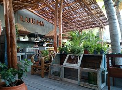L U U M A Gathering Bar