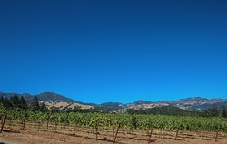 Napa Valley Boutique Wine Tours