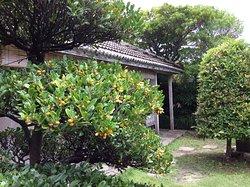 庭の花きは風水を意識して配置されています。