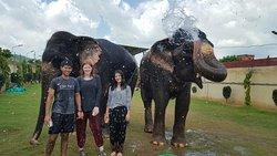 Elephant Joy
