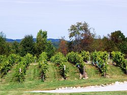 Oceana Winery and Vineyard