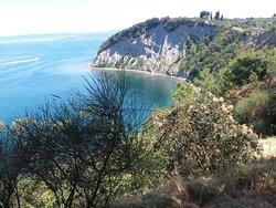 Strunjan Cliff
