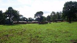 Open grasslands-2