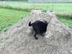 Shaker Field Dog Park