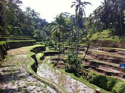 Made Real Bali Tours
