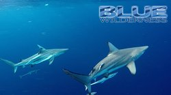 Blue Wilderness Shark Adventures